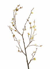 stick with flowers on white background