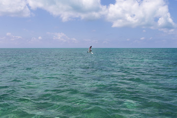 Single seagull is flying over the sea
