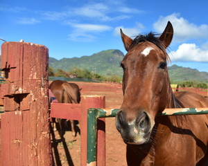 portrait of horse in corral with mountains and blue sky with clouds in background