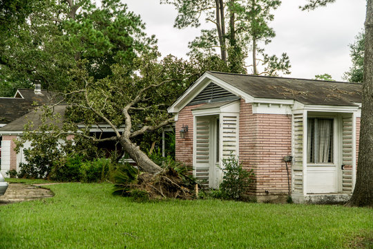Fallen Tree on a home after Hurricane Harvey