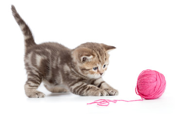 Young cat playing with red clew isolated
