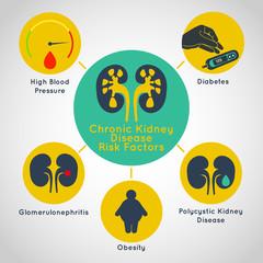 chronic kidney disease risk factors vector icon infographics