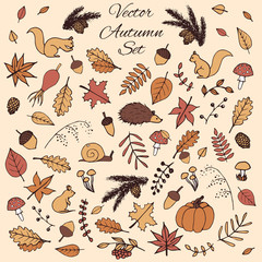 Colorful hand drawn set of vector autumn elements. Includes foliage, rowan berries, acorns, mushrooms, oak and maple leaves, rosehips, squirrels, pine cones and branches, a mouse and a hedgehog.