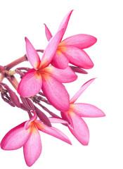 leelawadee flowers