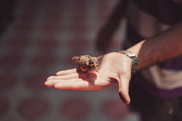Small sparrow on the hand of a man with a wristwatch