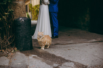 Red cat courtyard and wedding couple outdoors
