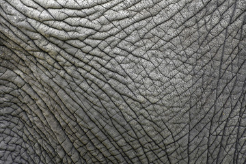 Fotorolgordijn Olifant The skin texture of an old elephant