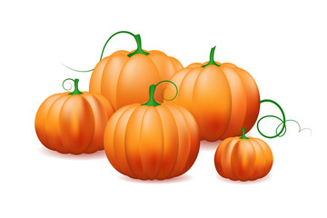 bunch of pumpkins isolated on white background.