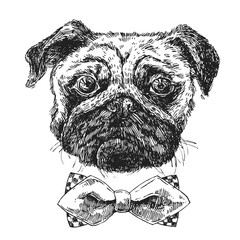hand drawn sketch illustration dog