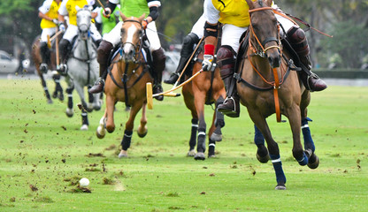 Horse Polo Player Playing