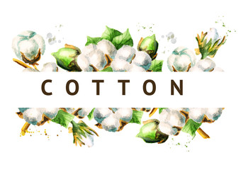 Cotton background. Watercolor hand-drawn  illustration