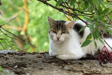 Streunende Katze in Spanien