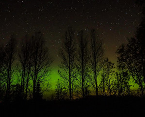 Northern lights behind the trees in Finland