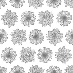 Linear seamless pattern - chrysanthemum and chamomile flowers.