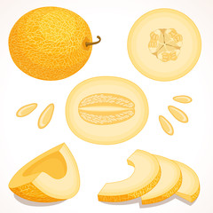 Set of vector melon. Whole, sliced, half of yellow muskmelon isolated on white background. Vector illustration. Cantaloupe.