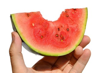 Red mini watermelon Citrullus lanatus var. lanatus piece with premorse piece held in left hand on white background