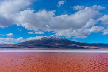 Flamingoes in Laguna Colorada , Uyuni, Bolivia