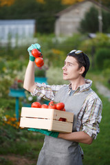 Young agronomist with box tomato