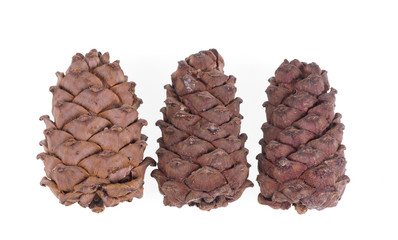 cedar cone over white background