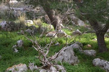 Il ramoscello nel verde