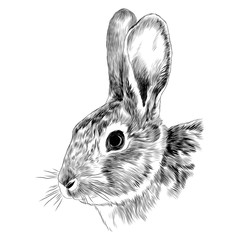 Bunny head sketch vector graphics monochrome black-and-white drawing