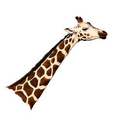 giraffe head sketch vector graphics monochrome illustration black and white