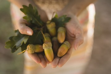 Person showing acorns