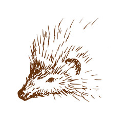 Hand drawn hedgehog, wild animal. Sketch, vector illustration.