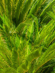 And vivid picture of palm leaves.