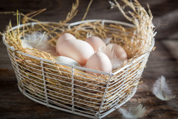 Healthy and ecological eggs from the farm