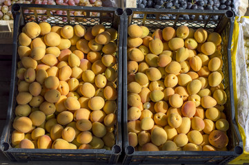 Yellow ripe apricots lie on the display in a black container for sale.