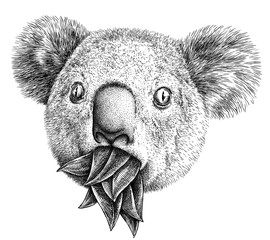 black and white engrave isolated Koala illustration