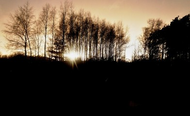 Black and white horror landscape/ This is a sunset behind dark trees.