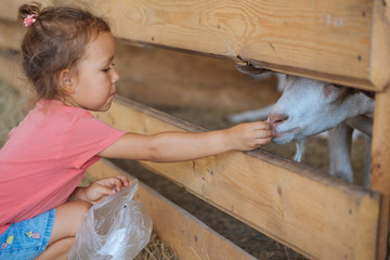 Little cute girl feeds white goat at goat farm. Little girl with goat