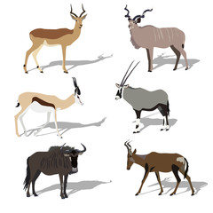 Five african antilope, set, shadows, 