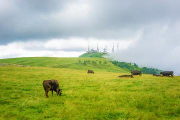 高原の風景、長野県、美ヶ原高原。