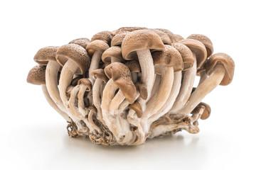 Yanagi Mutsutake (Japanese mushroom)