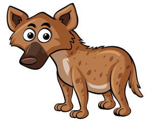 Hyena on white background