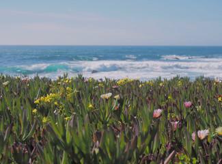 Blooming Ocean