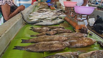 Fresh sea food in the market, Madagascar