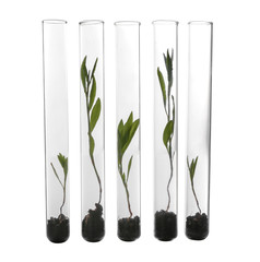 Plants in test tubes on white background