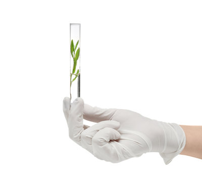 Female hand in glove holding test tube with plant on white background