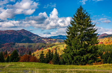 magnificent mountainous landscape in autumn