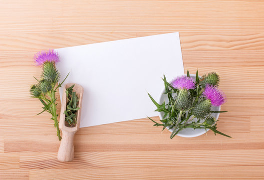 Milk thistle / flowering Mary thistle and copy space