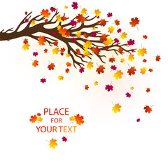 Vector autumn background with maple tree, falling leaves and place for your text. Good for banners, greeting cards, posters, flyers.