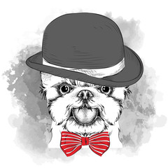 Image Portrait of dog in the hat, cravat and glasses. Yorkshire Terrier. Vector illustration.