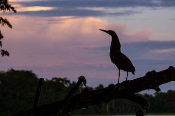 Silhouette eines Reiher am Lago Sandoval, Peruanischer Amazonas