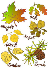 Leaves with the names of the autumn color. Brush lettering. Set.