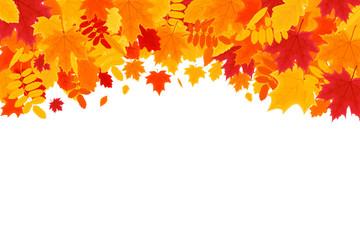 Autumn Background. Colorful Autumn Leaves on White Background with Space for Your Text. Vector Illustration for the Autumn Theme.
