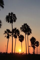 coucher de soleil sous les palmiers